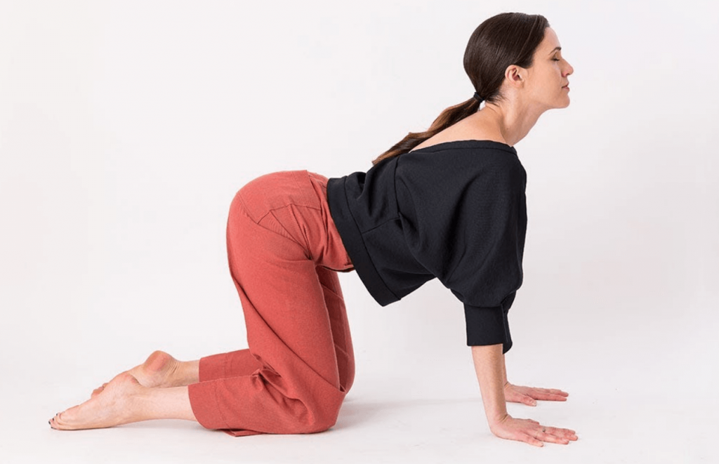 Seated Cat-Cow Pose